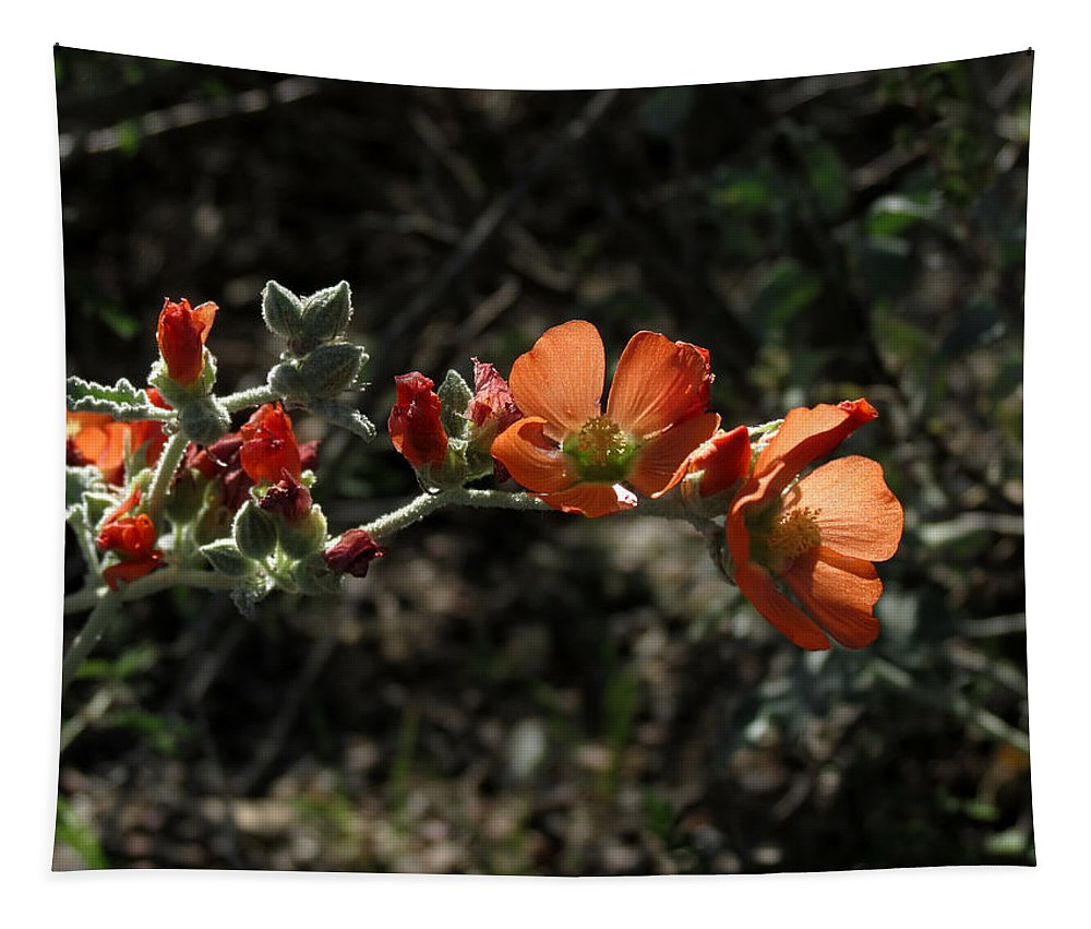 Plant Tapestry featuring the photograph Desert Globemallow by Laurel Powell