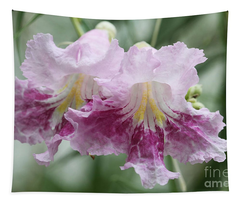 Chilopsis Tapestry featuring the photograph Desert Willow by Judy Whitton