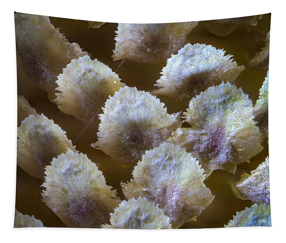 Macro Tapestry featuring the photograph Details by Jean Noren