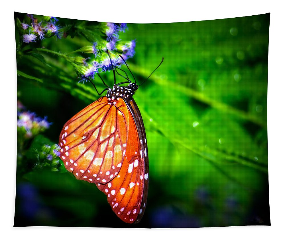 Soldier Butterfly Tapestry featuring the photograph Dewdrop Butterfly by Mark Andrew Thomas