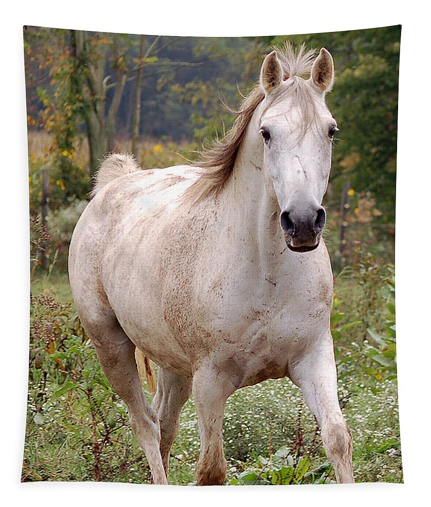 White Horse Tapestry featuring the photograph Did You Call Me by Annette Persinger