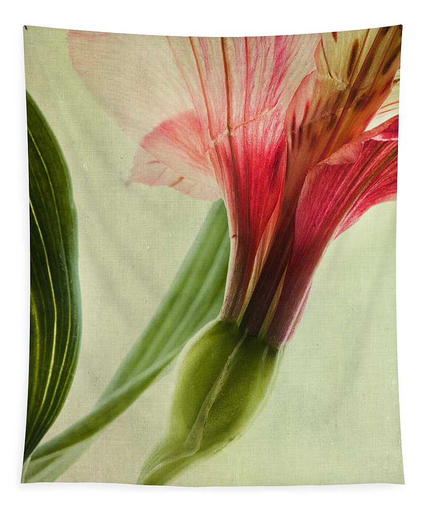 Peruvian Lily Tapestry featuring the photograph Dim Colours by Priska Wettstein