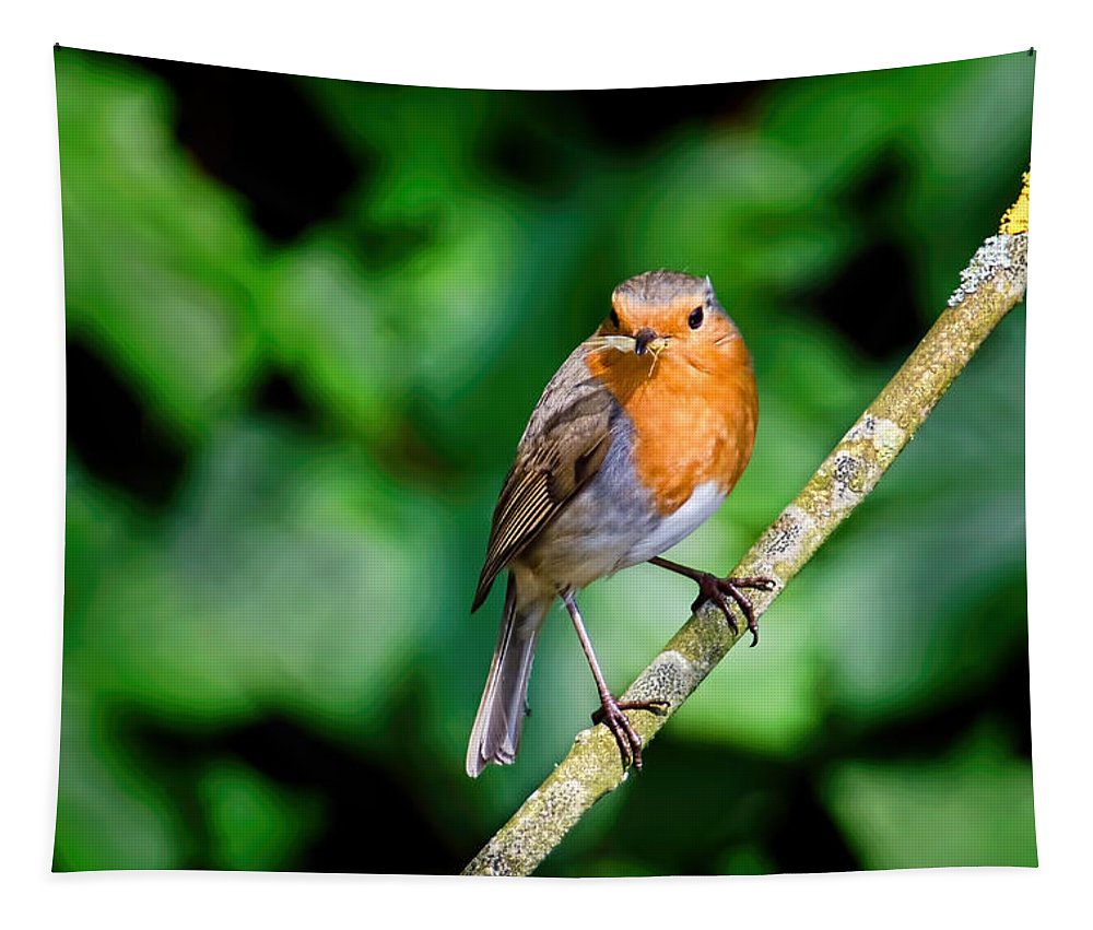 Robin Tapestry featuring the photograph Dinner Time by Susie Peek