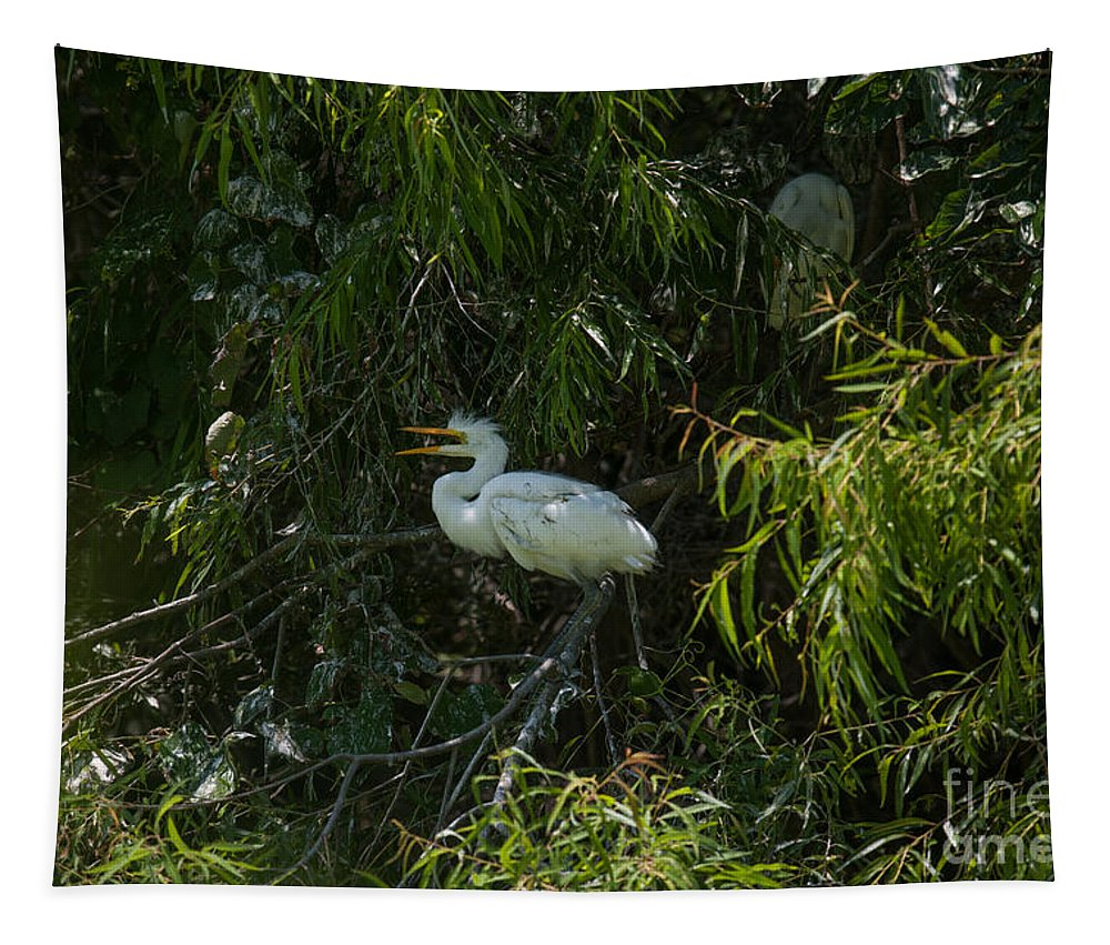 Egret Tapestry featuring the photograph Dirty Bird by Dale Powell