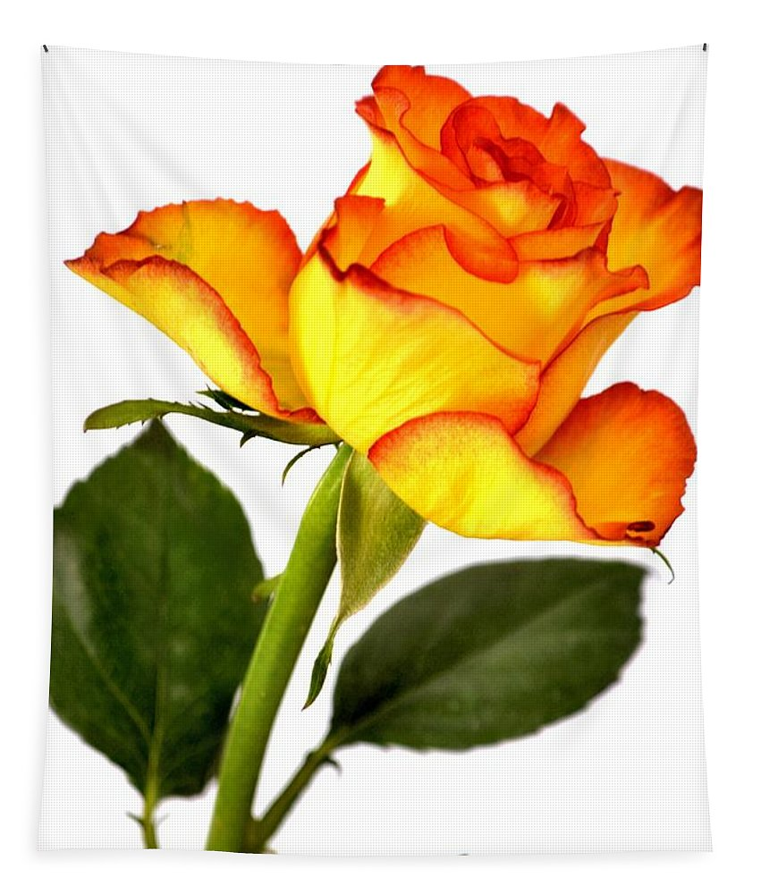 Yellow Tipped Rose Tapestry featuring the photograph Divine Rose by Deb Halloran