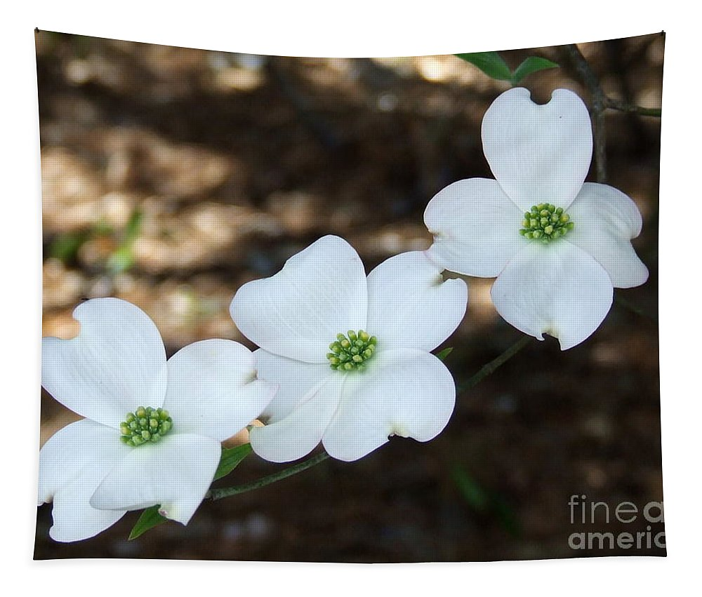 Dogwood Tapestry featuring the photograph Dogwood by Andrea Anderegg