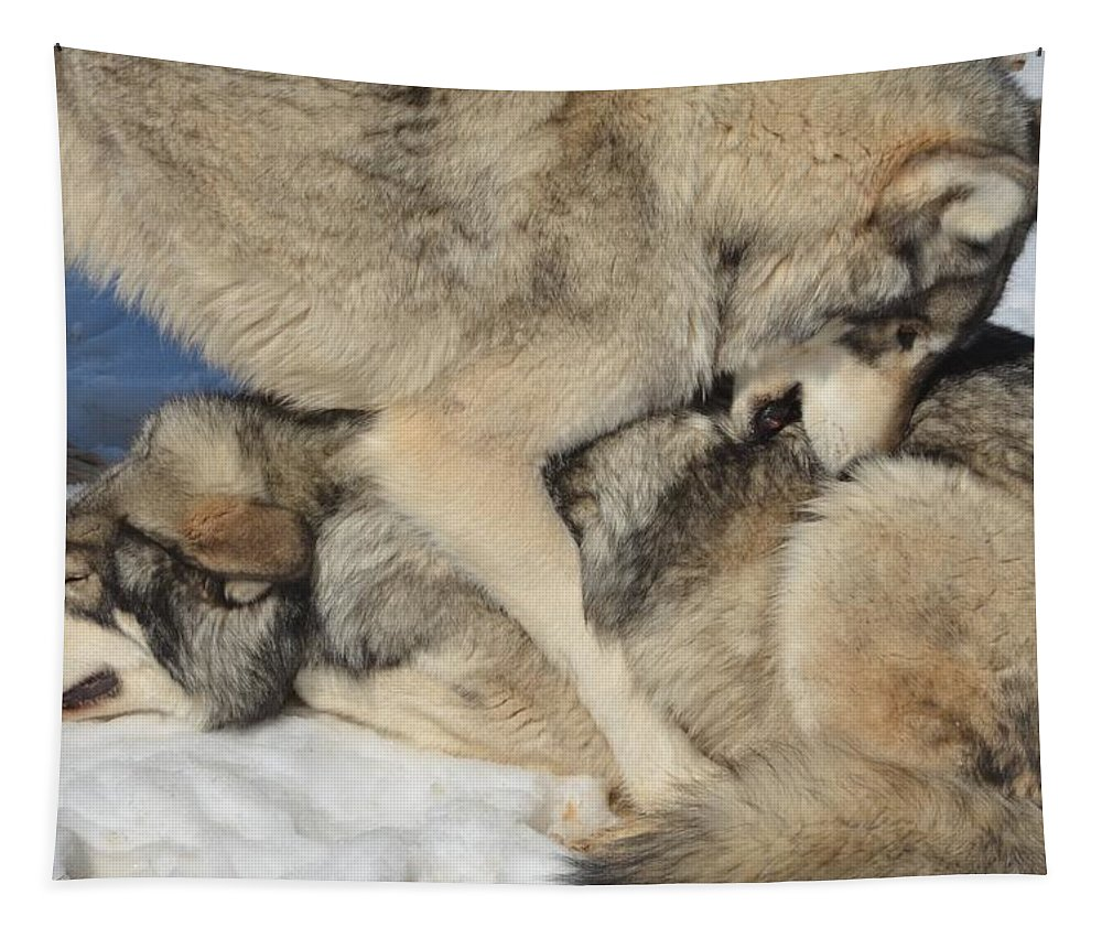 Wolf Tapestry featuring the photograph Dominance by Paulina Roybal