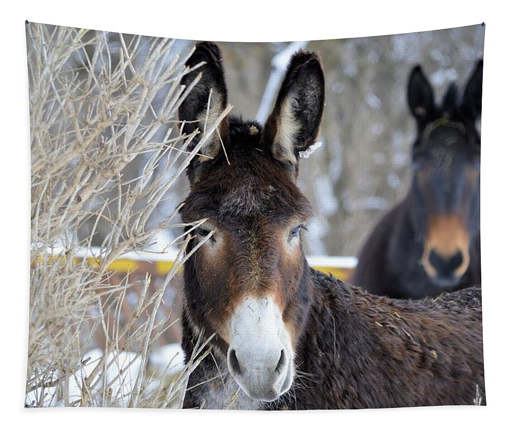 Agriculture Tapestry featuring the photograph Donkey And The Mule by Bonfire Photography