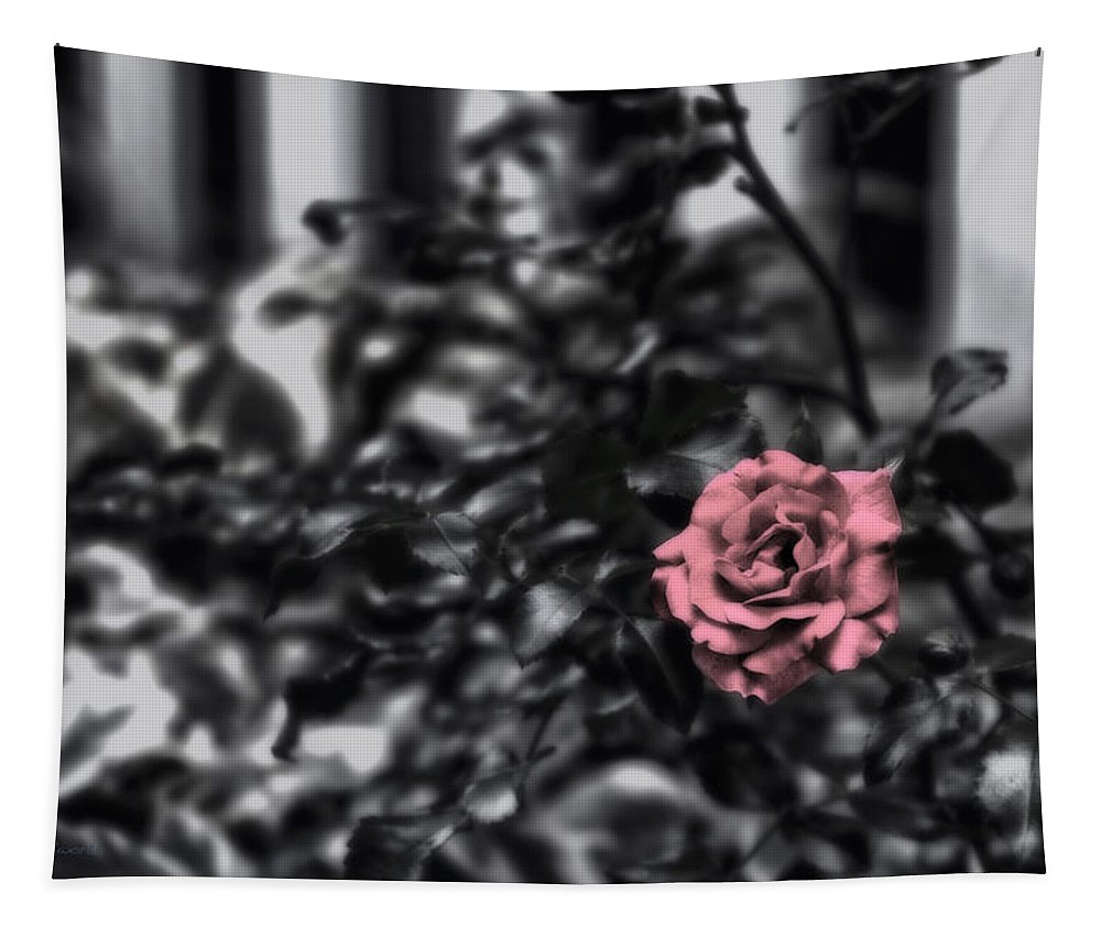 Donna Tapestry featuring the photograph Donna's Rose by Thomas Woolworth