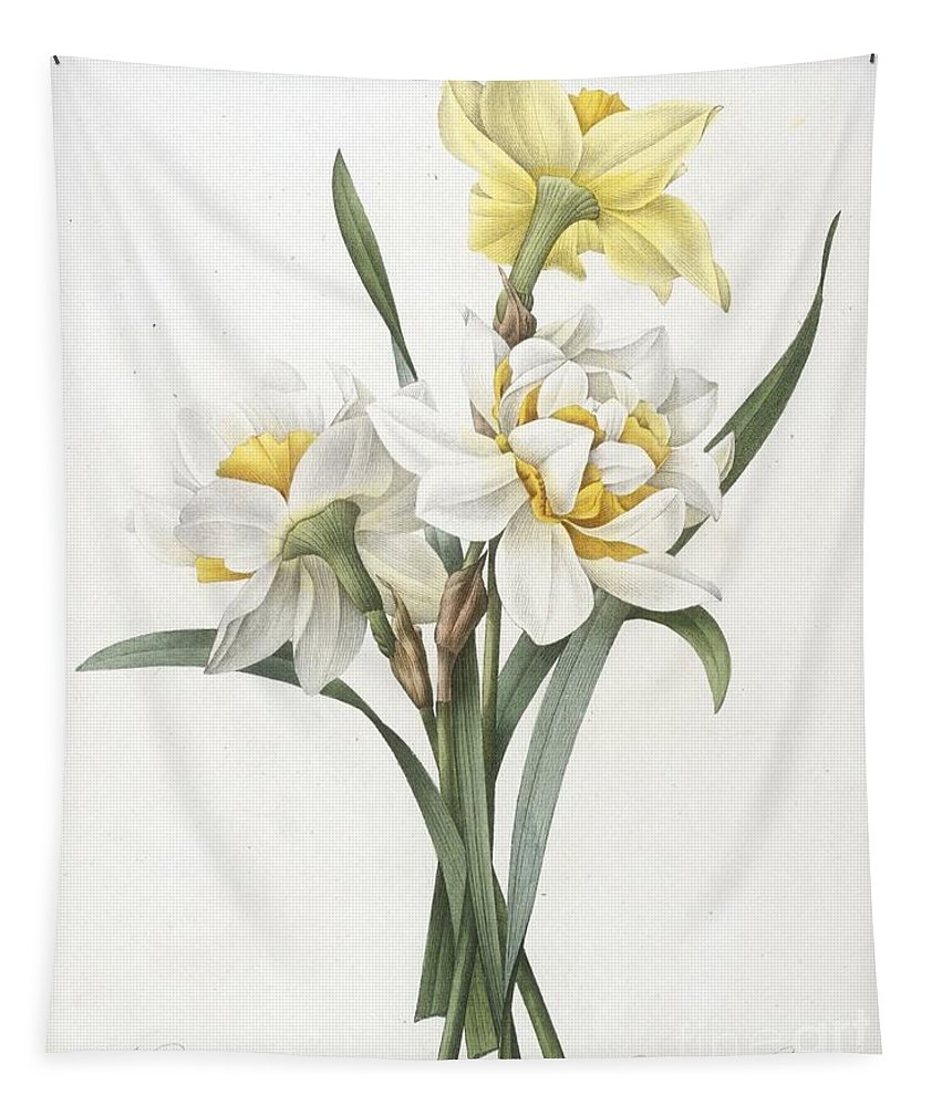 Floral Tapestry featuring the painting Double Daffodil by Pierre Joseph Redoute