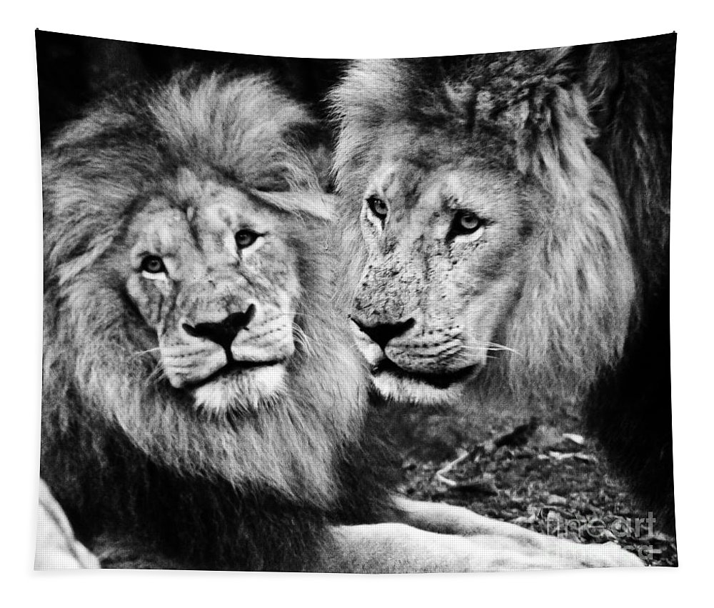 Lions Tapestry featuring the photograph Double Power by Ben Yassa