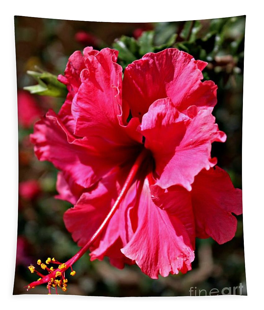 Hibiscus Tapestry featuring the photograph Double Red by Clare Bevan