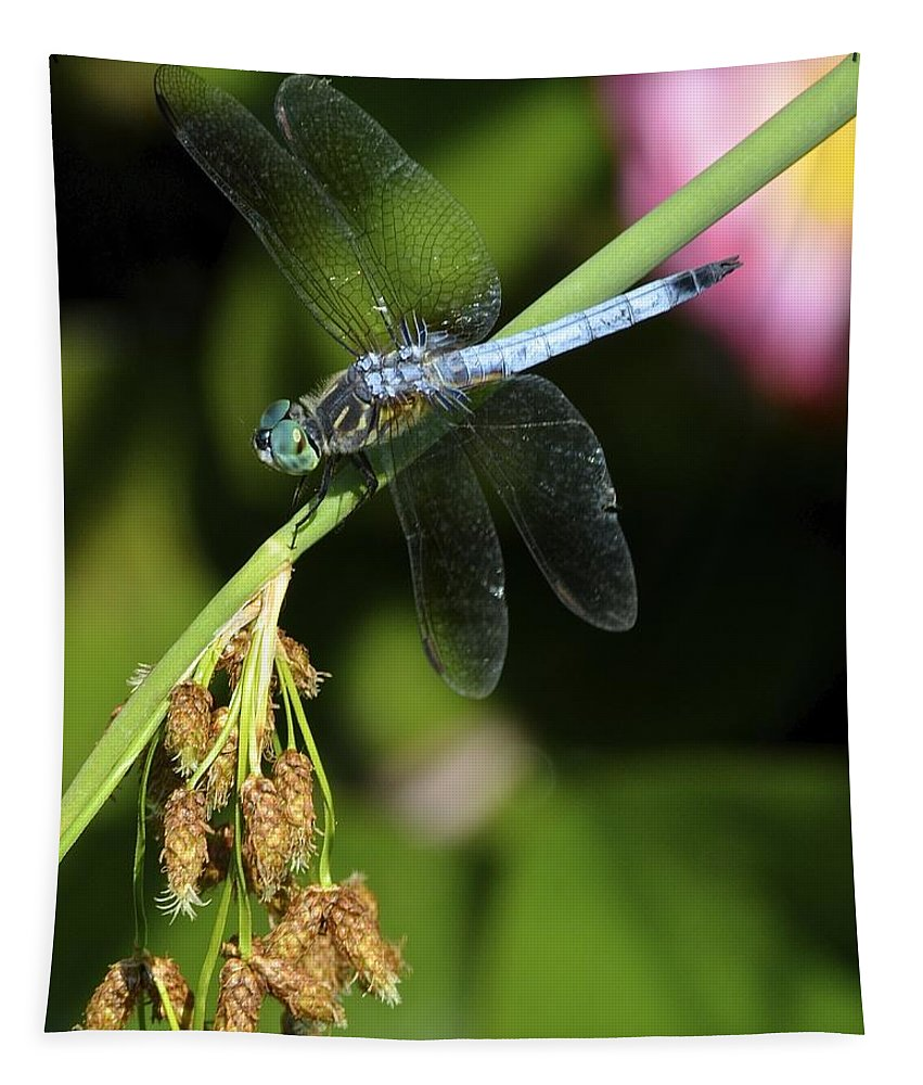 Dragon Tapestry featuring the photograph Dragon Fly by Frozen in Time Fine Art Photography