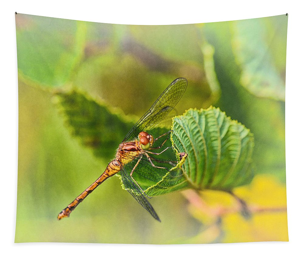 Dragonfly Tapestry featuring the photograph Dragonfly Days II by Susan Capuano