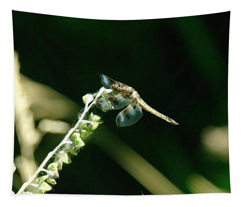 Dragonflies Tapestry featuring the photograph Dragonfly Resting In The Wind by Jeff Swan