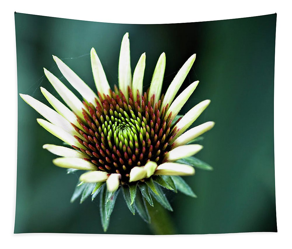 Flower Tapestry featuring the photograph Eager by Steve Harrington