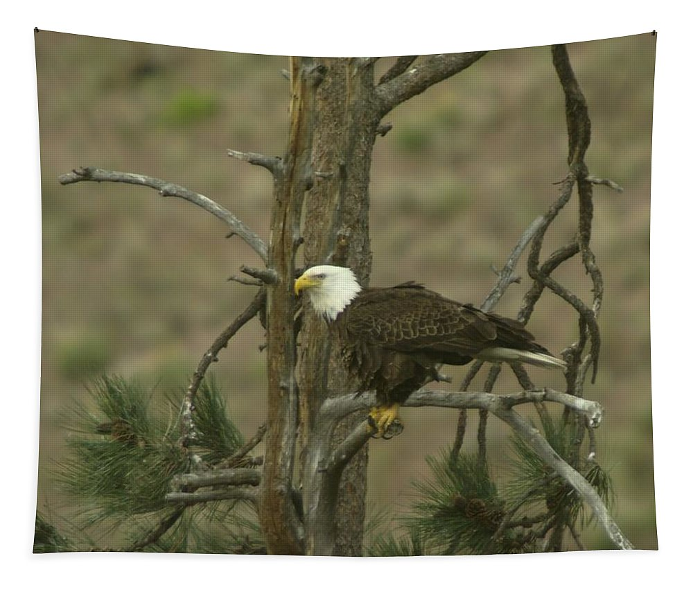 Eagle Tapestry featuring the photograph Eagle On A Tree Branch by Jeff Swan