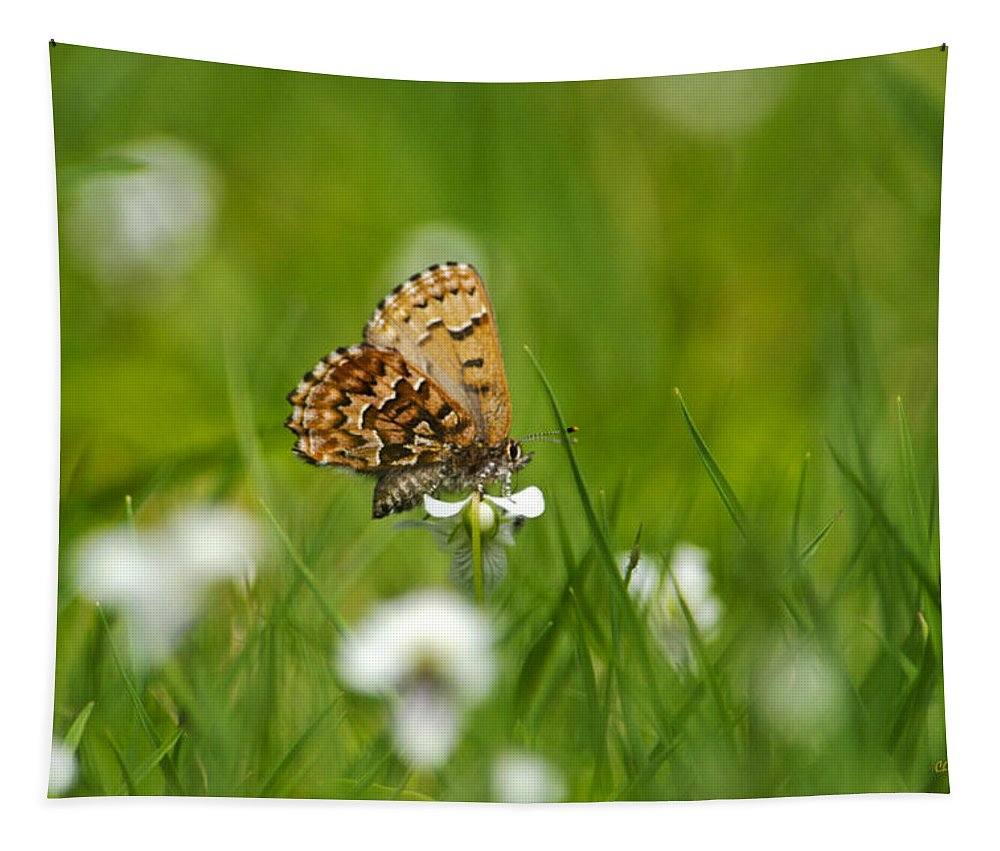Butterfly Tapestry featuring the photograph Eastern Pine Elfin Butterfly by Christina Rollo