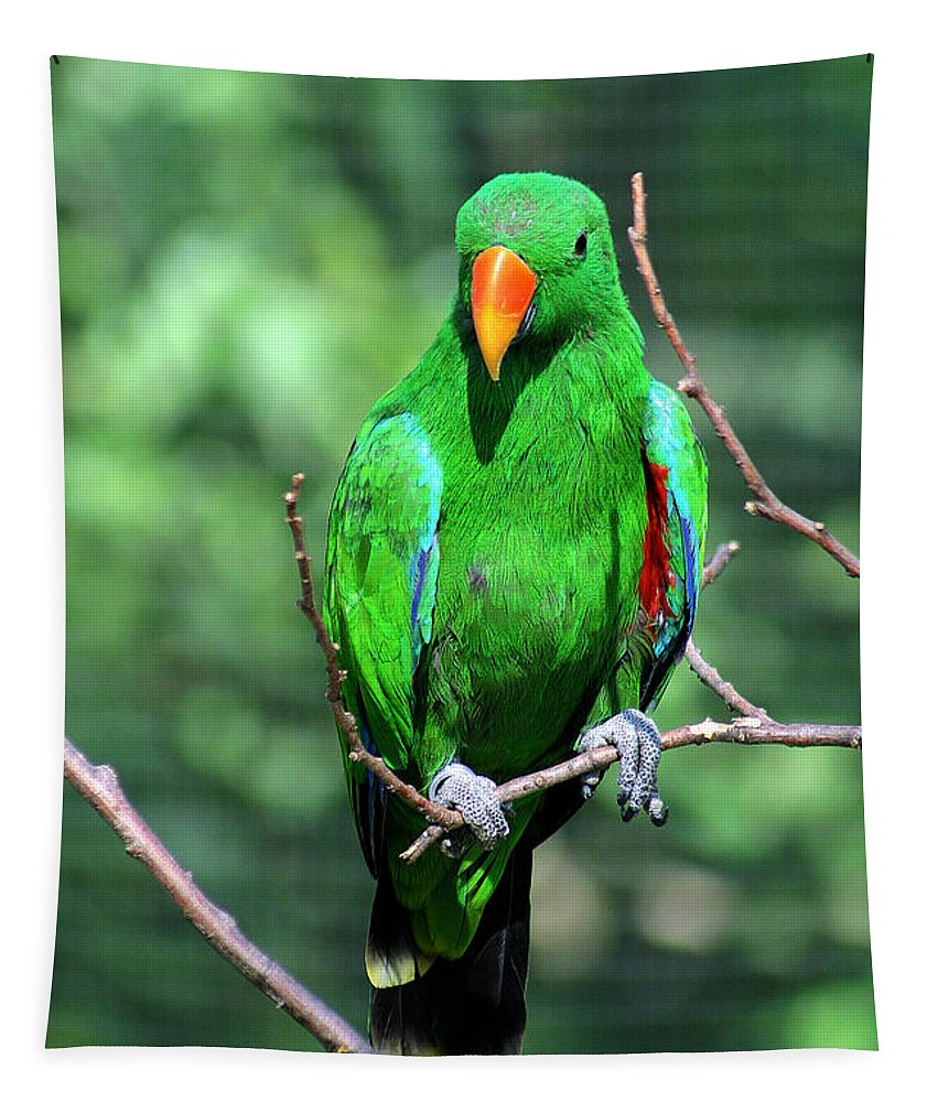 Bird Tapestry featuring the photograph Eclectus Parrot-1 by Gary Gingrich Galleries