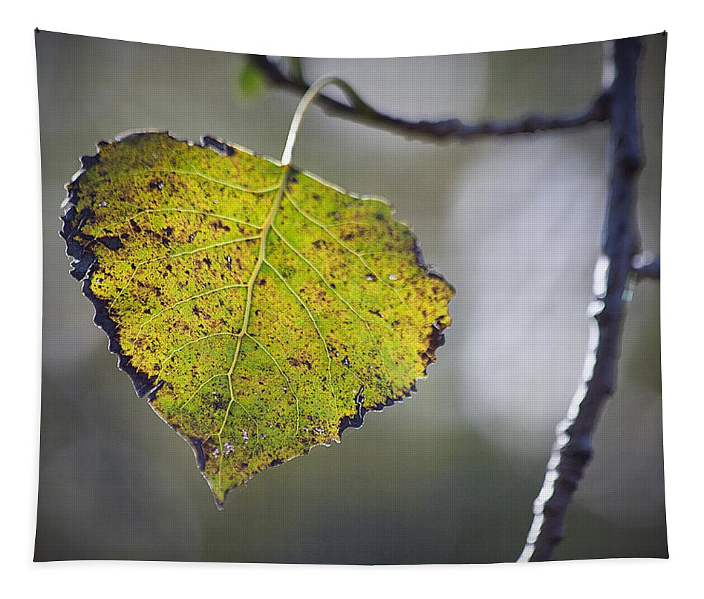 Fall Tapestry featuring the photograph Edge Of Change by Karol Livote