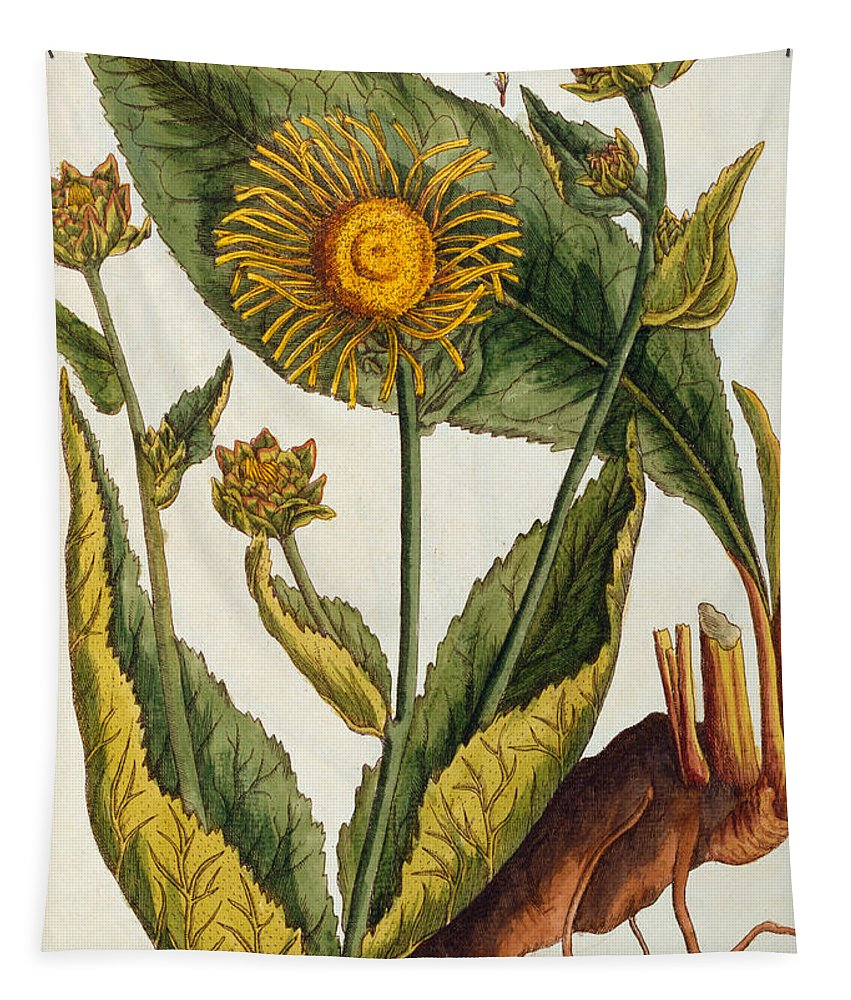 Still-life Tapestry featuring the painting Elecampane by Elizabeth Blackwell