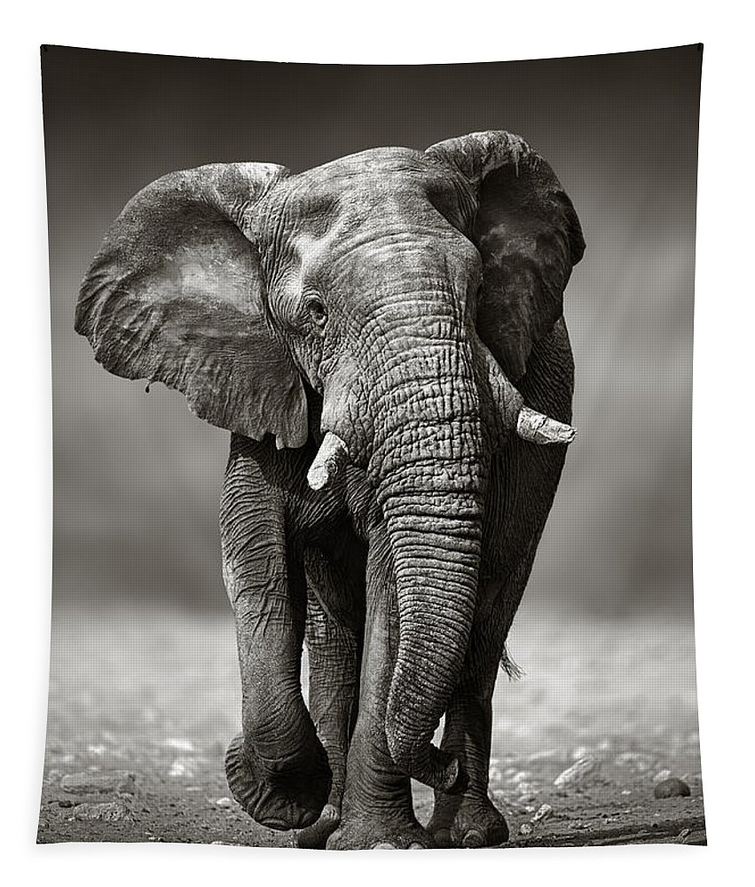 Elephant Tapestry featuring the photograph Elephant approach from the front by Johan Swanepoel
