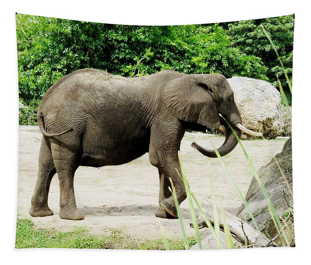 Elephant Tapestry featuring the photograph Elephant by Zina Stromberg