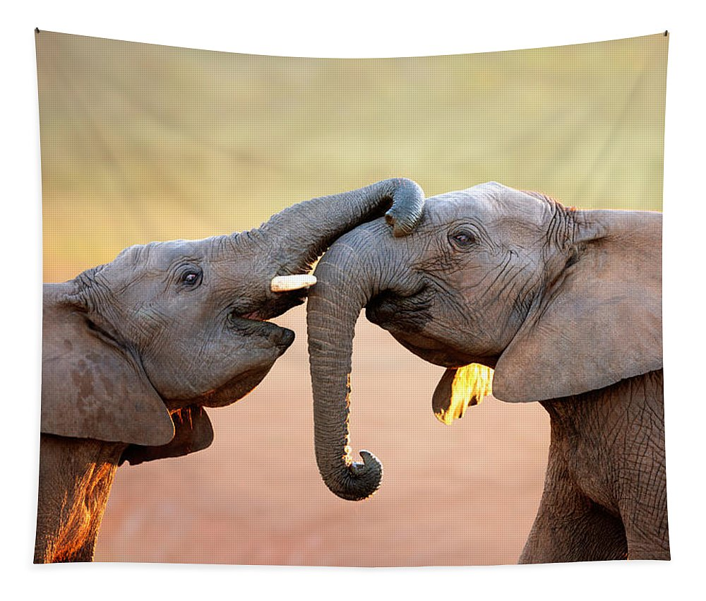 Elephant Tapestry featuring the photograph Elephants touching each other by Johan Swanepoel