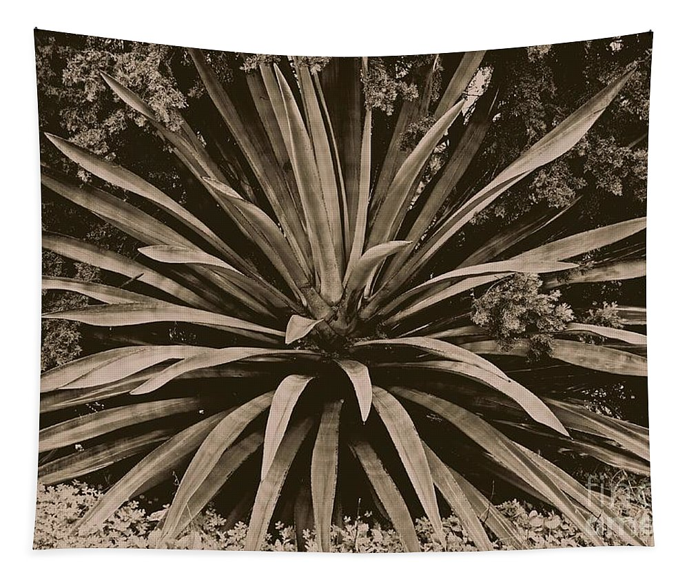 Succulent Tapestry featuring the photograph Emerge by Clare Bevan