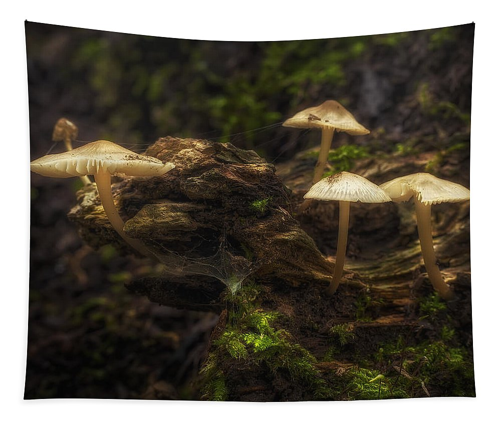 Mushrooms Tapestry featuring the photograph Enchanted Forest by Scott Norris