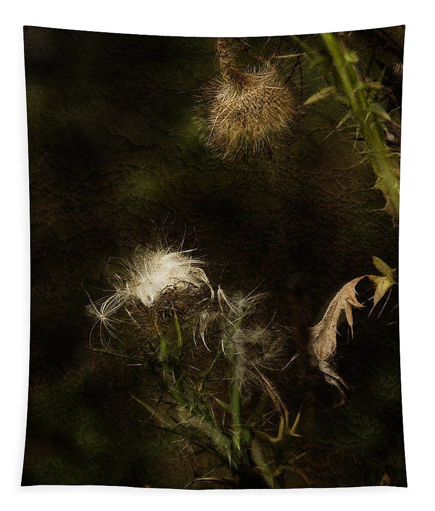 Milkweed Tapestry featuring the photograph Enigma No 2 by Belinda Greb