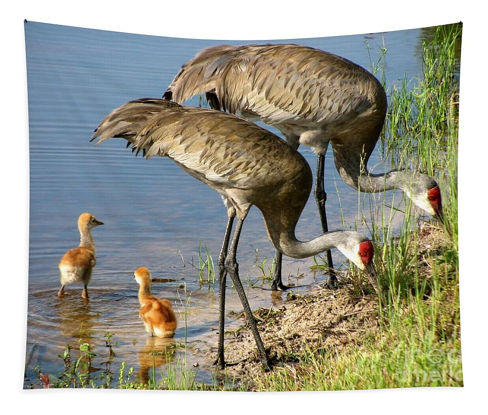 Sandhill Cranes With Chicks Tapestry featuring the photograph Enjoying The Water by Zina Stromberg