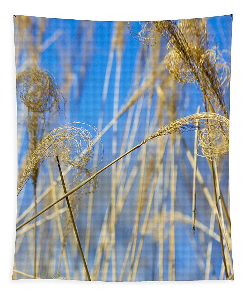Growth; Fragility; Grass; Meadow; No People; Vertical; Outdoors; Day; Close-up; Focus On Foreground; Nature; Eulalia Grass Tapestry featuring the photograph Eulalia Grass Native To East Asia by Anonymous