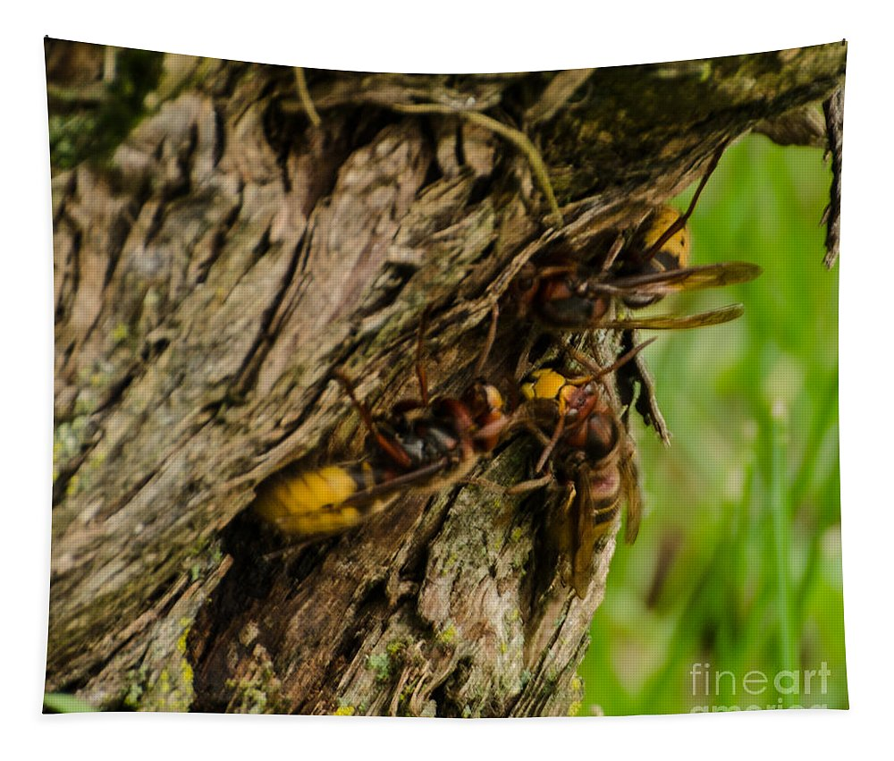 Insects Tapestry featuring the photograph European Horents by Donna Brown