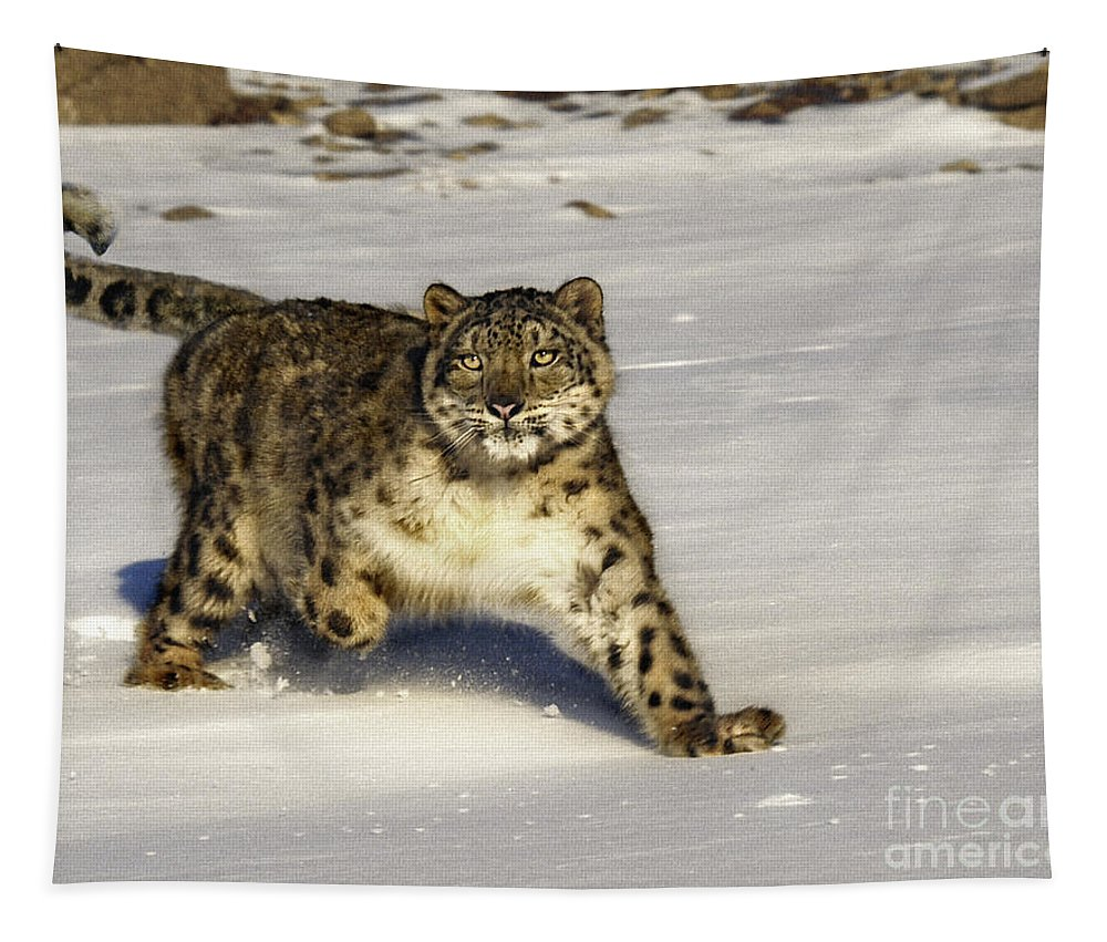 Snow Leopard Tapestry featuring the photograph Evening Prowl by Wildlife Fine Art