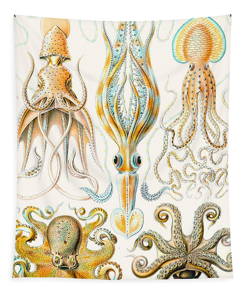 Haeckel Tapestry featuring the drawing Examples Of Various Cephalopods by Ernst Haeckel