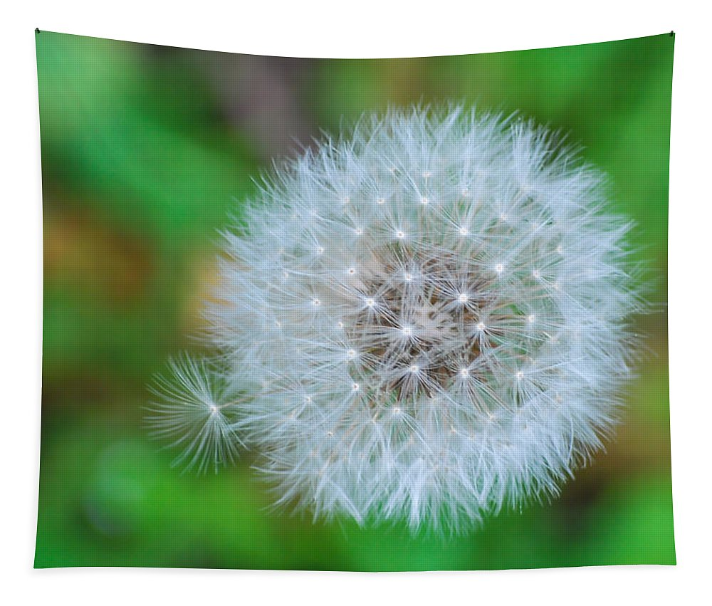Terry Deluco Tapestry featuring the photograph Extra Little Dandelion Wish by Terry DeLuco