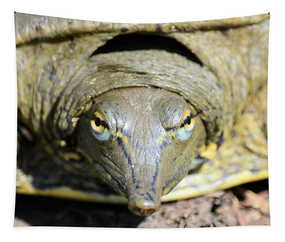 Turtle Tapestry featuring the photograph Eye Liner Turtle 8494 by Bonfire Photography