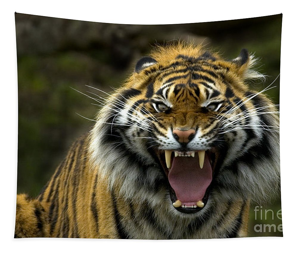 Tiger Tapestry featuring the photograph Eyes Of The Tiger by Mike Dawson