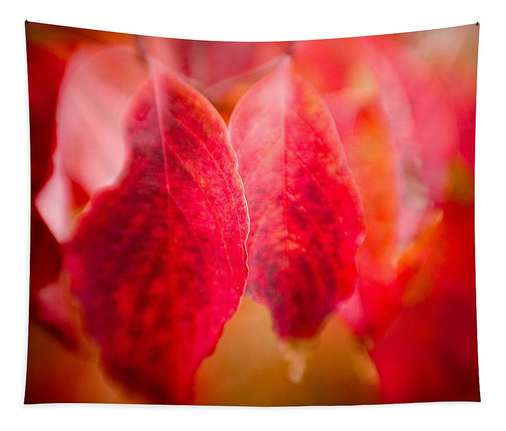 Color Tapestry featuring the photograph Fall Colors 0666 by Timothy Bischoff