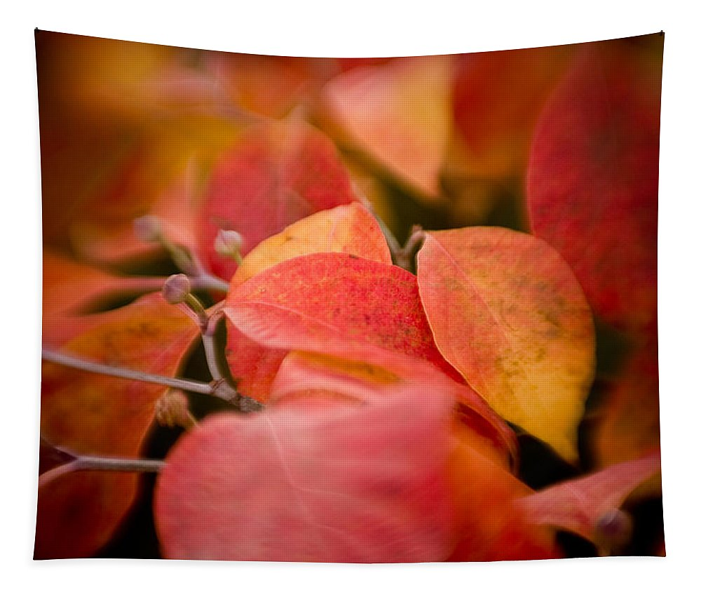 Color Tapestry featuring the photograph Fall Colors 6675 by Timothy Bischoff