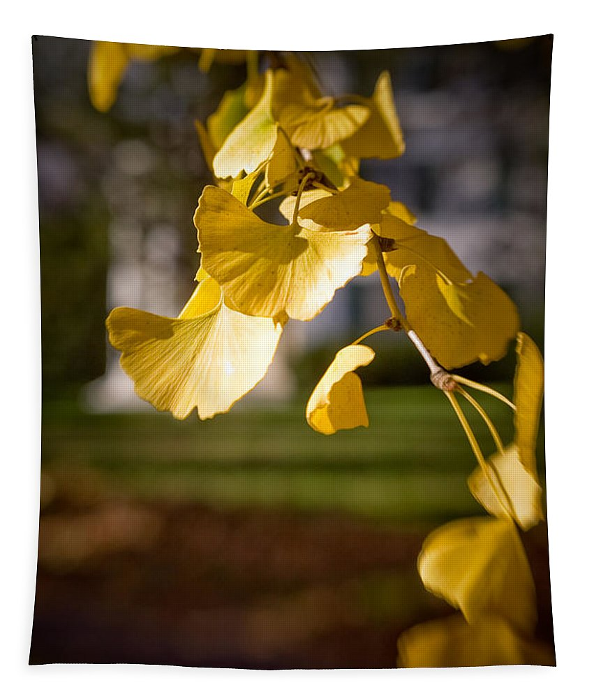 Color Tapestry featuring the photograph Fall Colors 6737 by Timothy Bischoff