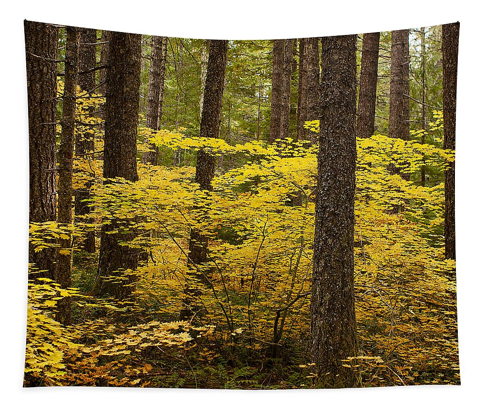 Forest Tapestry featuring the photograph Fall Foliage by Belinda Greb