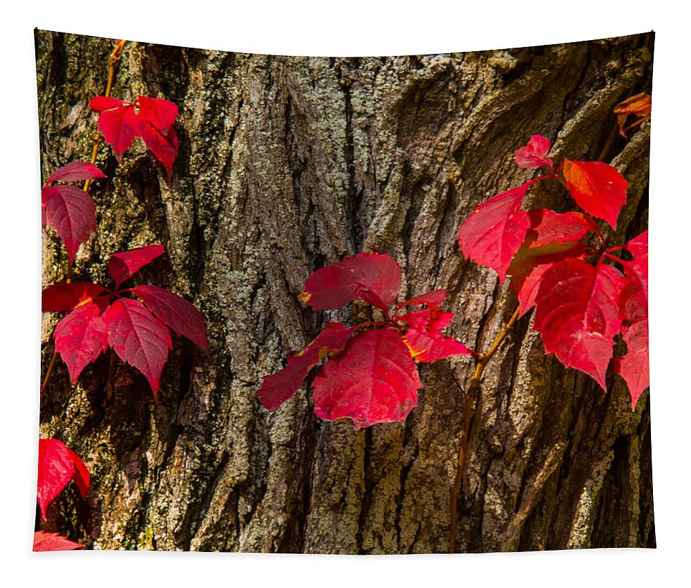 Fall Tapestry featuring the photograph Fall Leaves Against Tree Trunk by Robert Storost