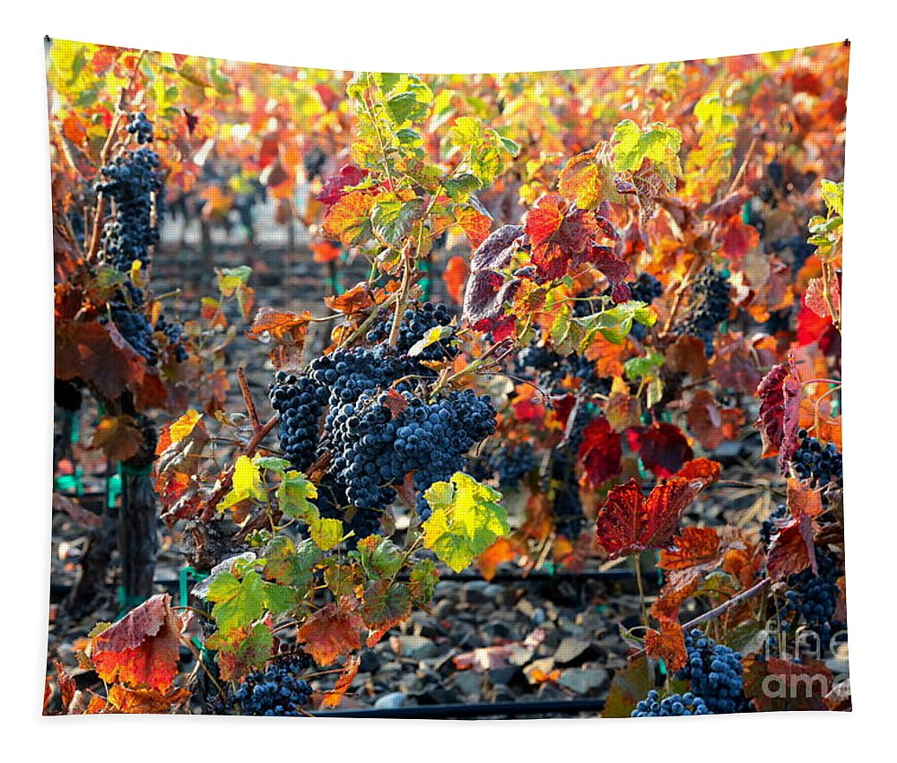 Fall Tapestry featuring the photograph Light Through Fall Vineyard by Carol Groenen