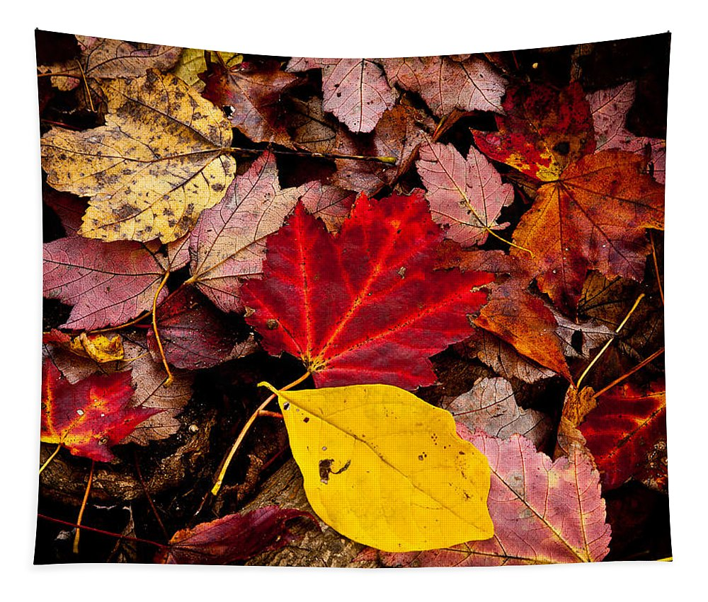 Autumn Tapestry featuring the photograph Fallen by Karol Livote