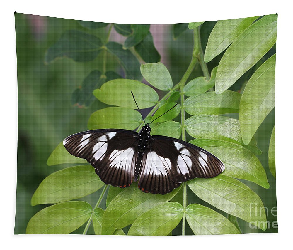 False Diadem Butterfly Tapestry featuring the photograph False Diadem Butterfly by Judy Whitton