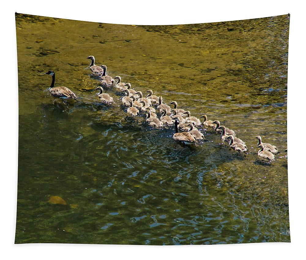 Geese Tapestry featuring the photograph Family Of Geese On The Rogue River by Mick Anderson