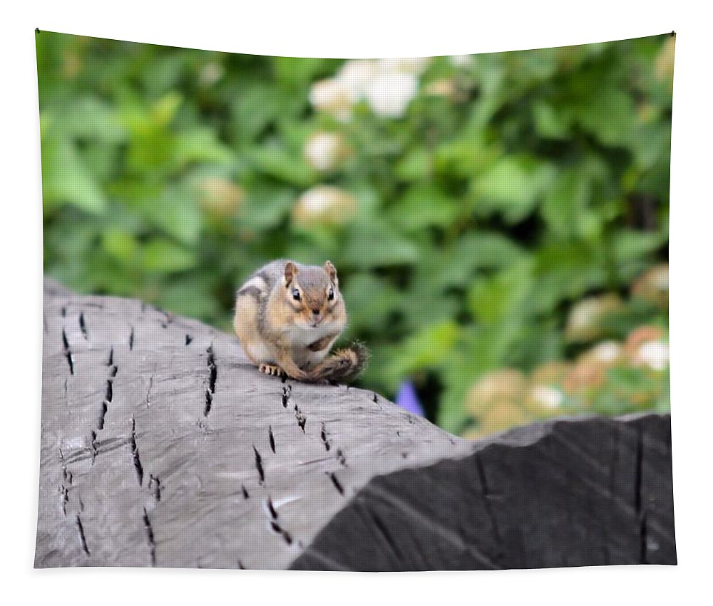 Chipmunk Tapestry featuring the photograph Feeling Chipper by Bonfire Photography