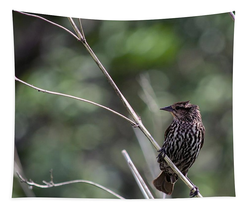Red-wing Tapestry featuring the photograph Female Red-wing by Bonfire Photography
